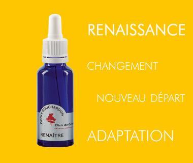 Elixir de Genêt / RENAîTRE